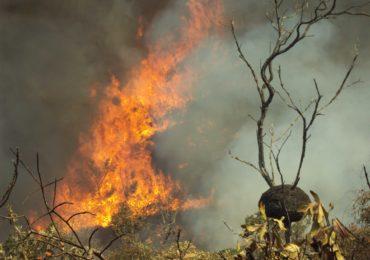 Previncêndio zela pelas unidades de conservação e se intensifica a partir de julho