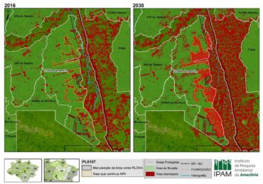 ONG estima que desmatamento em floresta na Amazônia vai dobrar até 2030