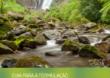 Guia sobre pagamentos por serviços ambientais orientará políticas públicas