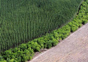 Projeto diminui penas para erros em licenciamentos ambientais