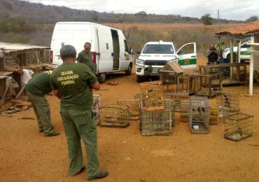 Ibama desativa 12 feiras de animais silvestres na PB