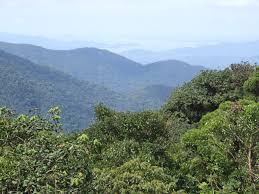 Grupo ambiental vai restaurar 210 hectares de Mata Atlântica em parques da Bahia