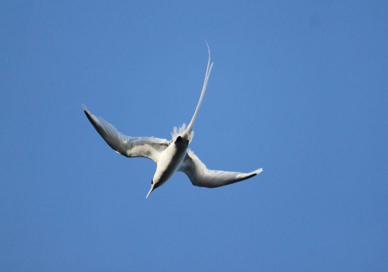 Ornithologia abre inscrições para artigos científicos