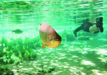 Cidade de Pernambuco dá aos rios os direitos dos cidadãos