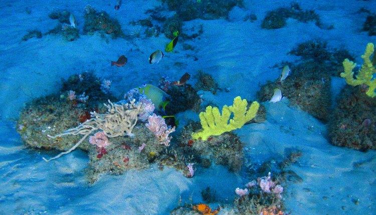 BHP desiste de explorar petróleo próximo aos Corais da Amazônia