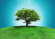 Novo decreto estabelece normas para licenciamento ambiental e tipifica infrações