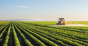 Você já ouviu falar na Comunidade que Sustenta a Agricultura?