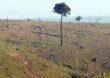 Mudanças climáticas propiciam expansão de doenças como dengue, diz WWF