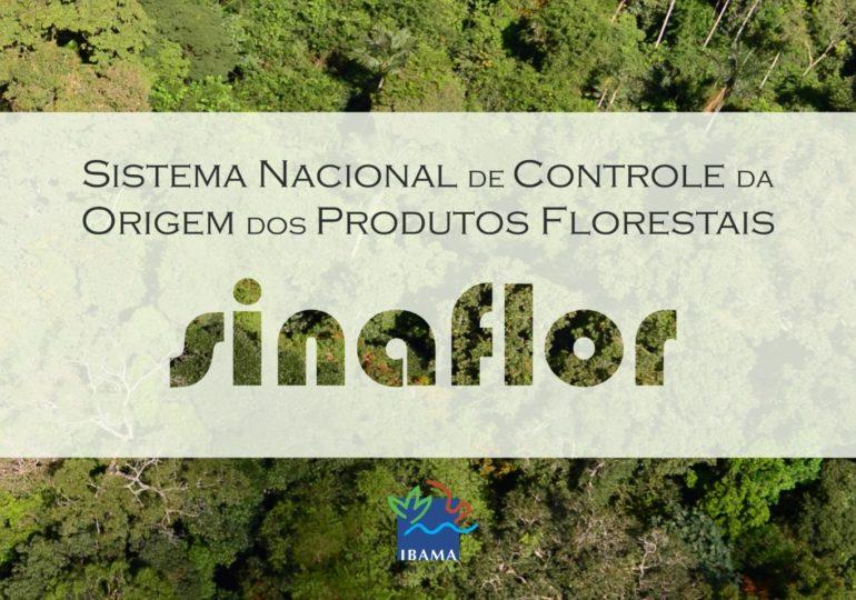Sinaflor aperfeiçoa e amplia controle da cadeia produtiva florestal no país