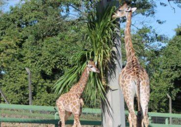 Meio Ambiente debate proibição de zoológicos e aquários no Brasil