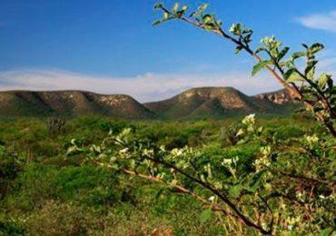 Sancionada lei para criação do fundo para compensação ambiental
