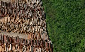 Comissão debate desmatamento ilegal na Amazônia e no Cerrado e metas no Acordo de Paris