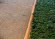 Desmatamento em alta pode minar chance de o Brasil cumprir meta contra aquecimento global