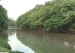 Lagoa da Pampulha, em BH, passa por obras de desassoreamento