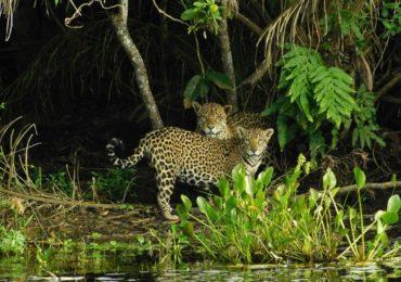 Terra perdeu 60% de seus animais silvestres em 44 anos, diz relatório