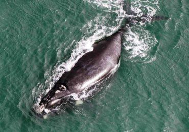 Justiça Federal em SC multa ICMBio por resistir à decisão que autoriza turismo de observação de baleias