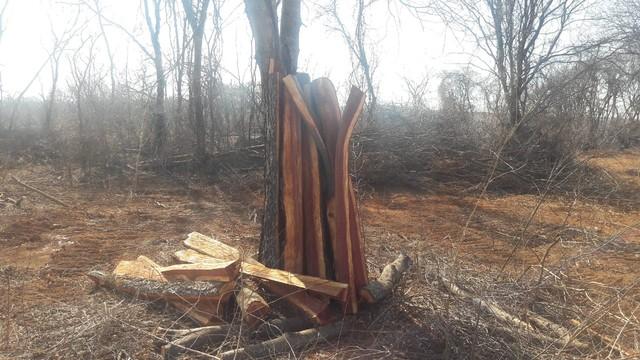 Quatorze pessoas são autuadas em operação de combate ao desmatamento no Norte de MG
