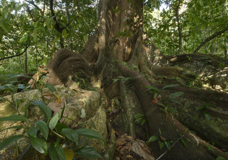 Sai resultado da licitação para o Parque Nacional Pau Brasil