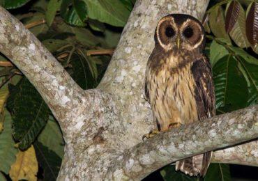 Observação de pássaros já é atividade comum no Santuário do Caraça, na Região Central de MG