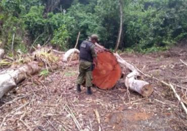 Equipes do Ibama sofrem ataques durante fiscalização na Amazônia