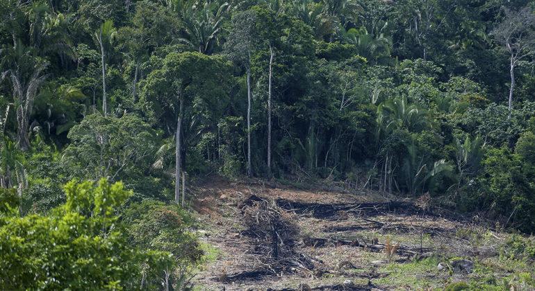 Nova regra do Código Florestal pode aumentar desmatamento na Amazônia