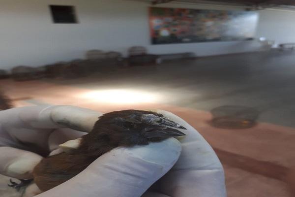 Fiscalização Preventiva Integrada resgata 295 animais silvestres criados ilegalmente