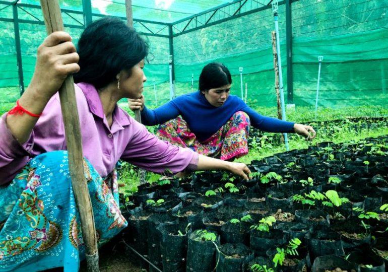 Reflorestamento no Camboja traz chuvas de volta para região seca