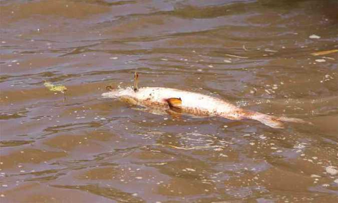 Água do Rio Paraopeba tem riscos à saúde humana e animal, confirma governo