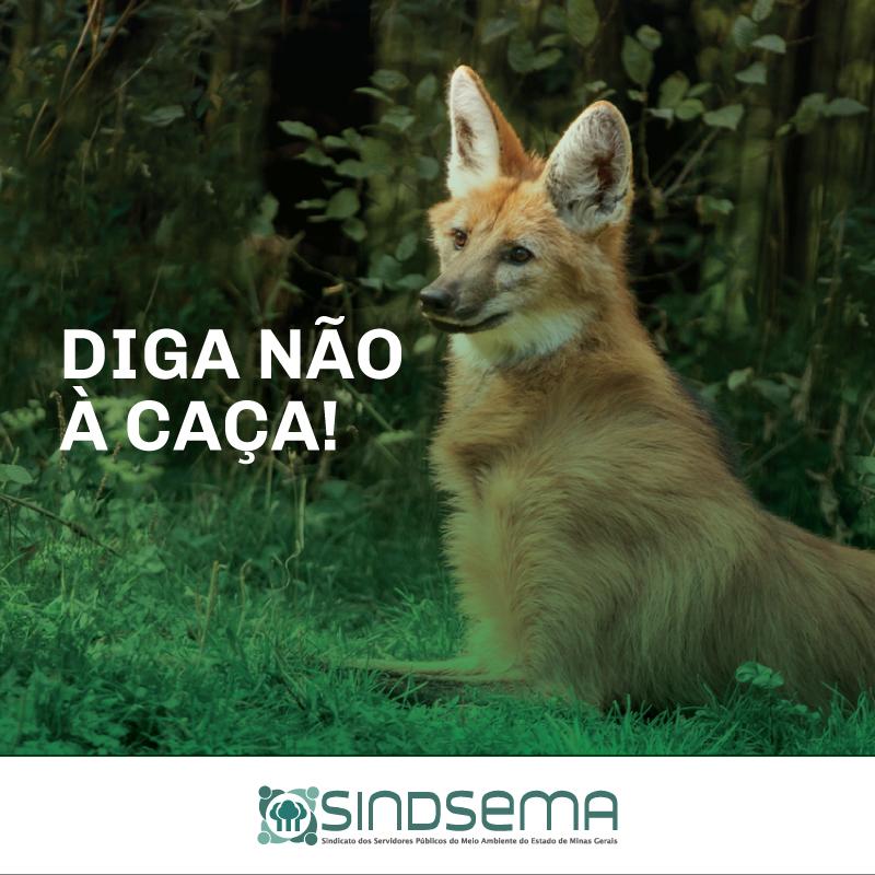 SOCIEDADE REAGE: NÃO À LIBERAÇÃO DA CAÇA NO BRASIL!