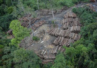 Desmatamento e Restauração: eis a questão!