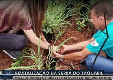 Mudas de árvores estão sendo plantadas para revitalização da Serra do Taquaril em Unaí