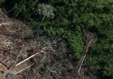 Amazônia bate novo recorde nos alertas de desmatamento em junho