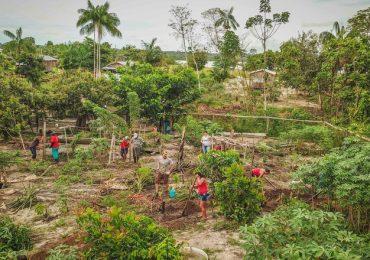 Agroflorestas geram mais lucro que soja e gado na Amazônia