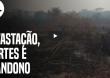 PF já tem provas para indiciar fazendeiros de MS por queimadas no Pantanal