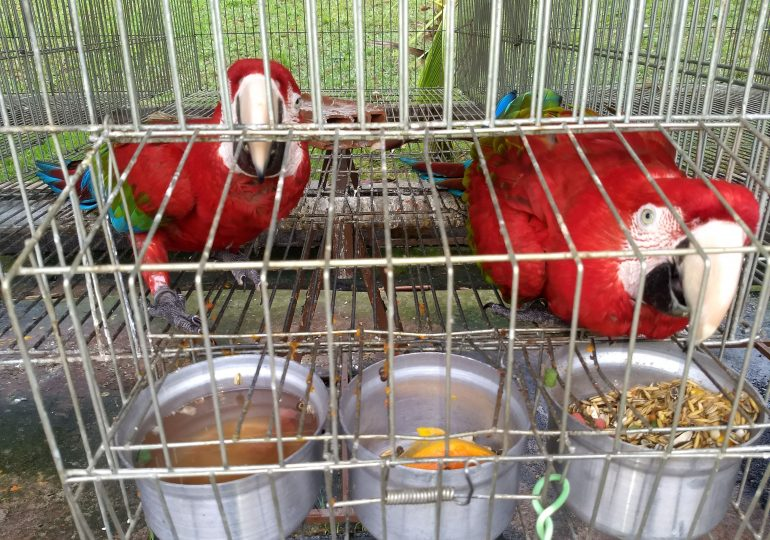 Operação Macaw atua no resgate de animais em situação de cativeiro