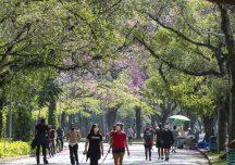 Eleições 2020: plataformas orientam eleitores e prefeitos sobre agenda ambiental