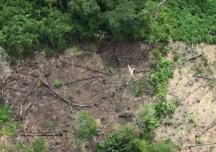 Novo estudo comprova a 'boiada' de Salles na área ambiental