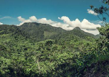 Perguntas sobre o meio ambiente, respostas para salvar o Planeta
