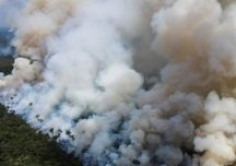 Desequilíbrios ecológicos podem causar epidemias